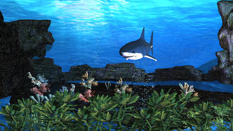 Blue Shark Underwater HD stock footage