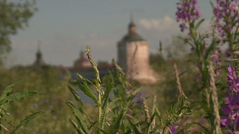 tower flowers