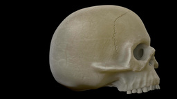 Skull Loop Animation