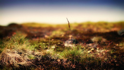 Ground Level Rocky Surface Full HD Stock Footage stock footage