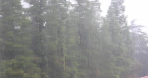 4k Window Raindrops,swaying tree Footage