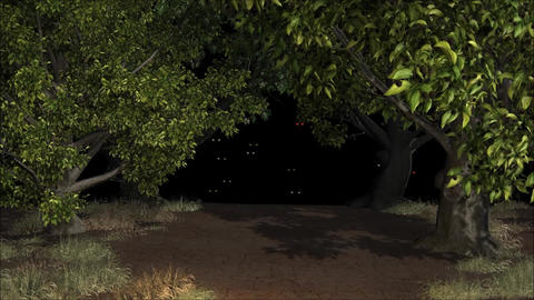 Night Forest Light Eyes HD Footage