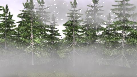 Alaska Forest Snow Rain Moment HD stock footage