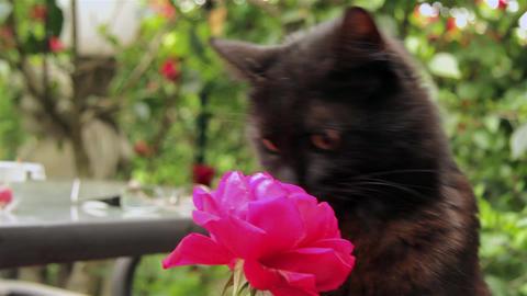 Cat 13 Live Action