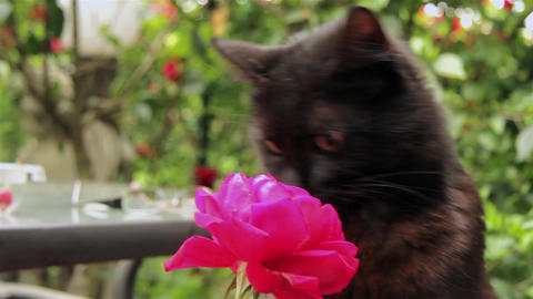 Cat 13 Footage