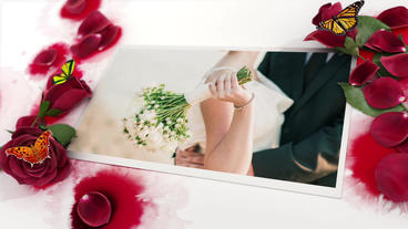 Roses And Inks stock footage