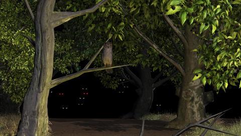 Owl Bird Night Forest Light Eyes stock footage