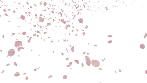 Rose petals pink tornado Ja 4 K Animation