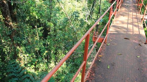 walking on treetop canopy footbridge, Live Action