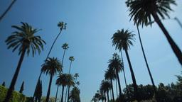 Palm Trees Driving POV Shot stock footage
