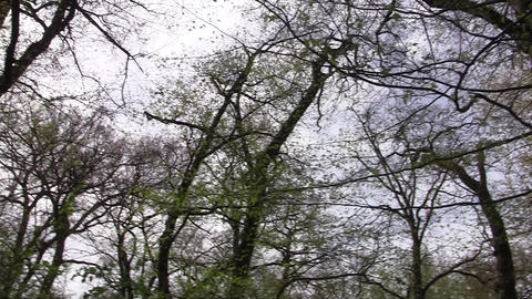Forest 14 stock footage