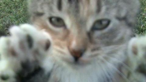 kitten on the grass Footage