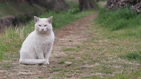 White Cat 2 ライブ動画