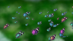 blue tone mass butterfly Stock Video Footage