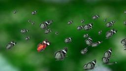 contrast mass butterfly CG動画素材