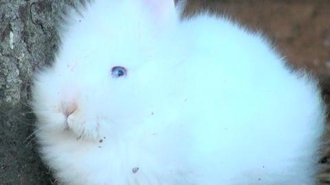 adorable white rabbit Stock Video Footage