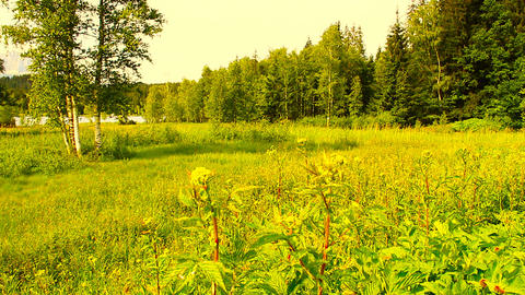 Forest and Field Beauty Scene 04 ARTCOLORED Stock Video Footage