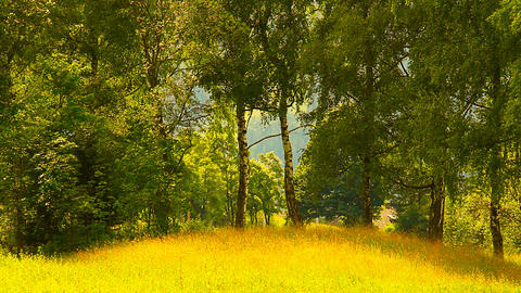 Nature Beauty Scene 02 ARTCOLORED Stock Video Footage