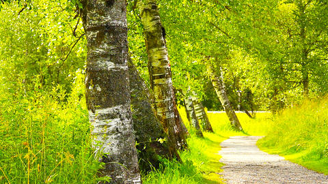 Path in Nature 13 ARTCOLORED Stock Video Footage