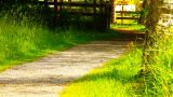Path in Nature 15 ARTCOLORED Stock Video Footage