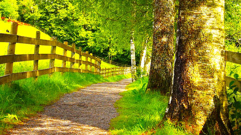 Path in Nature 17 ARTCOLORED Stock Video Footage