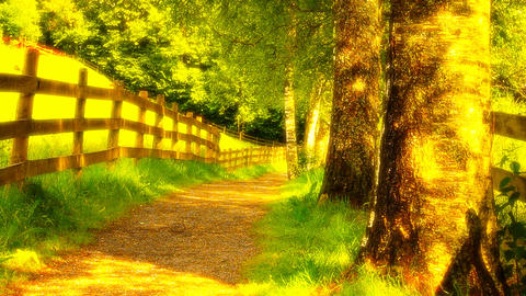 Runner On Nature Path 02 ARTCOLORED Stock Video Footage