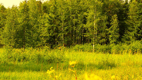 Summer Field and Forest Beauty Scenes 02 3 in 1 ARTCOLORED Stock Video Footage