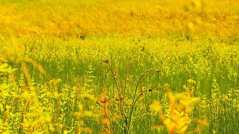 Summer Field Beauty Scene 02 ARTCOLORED Stock Video Footage