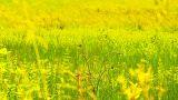 Summer Field Beauty Scene 04 ARTCOLORED Footage
