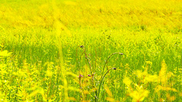 Summer Field Beauty Scene 04 ARTCOLORED Stock Video Footage