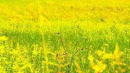 Summer Field Beauty Scene 04 ARTCOLORED Stock Video Footage