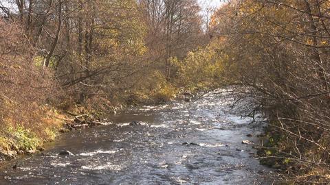 Creek Stock Video Footage