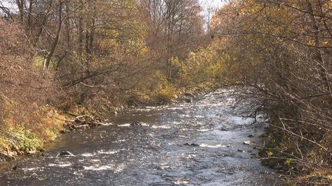 Creek Footage