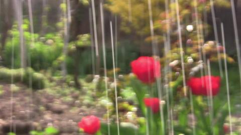 Rain with sun 01 Footage