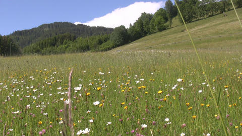 Meadow in the Alps Footage