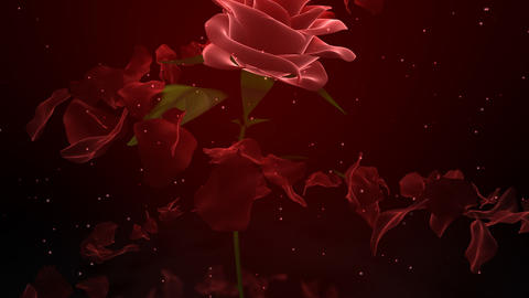 Wedding Rose Petals Stock Video Footage