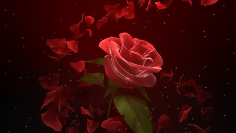 Wedding Rose Petals stock footage