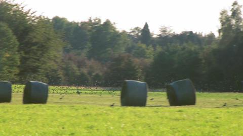 bird flock 05 Stock Video Footage