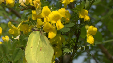 butterfly 02 Stock Video Footage