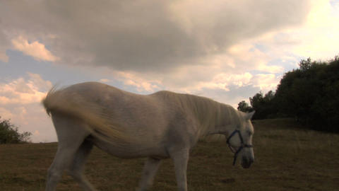 horses 01 Stock Video Footage