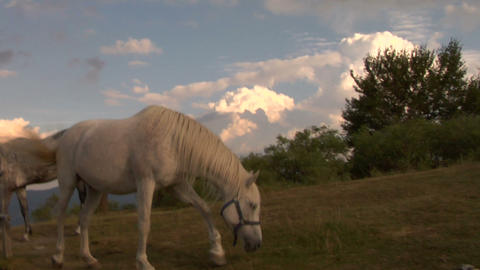 horses 03 Stock Video Footage