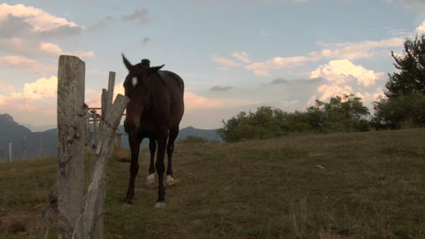 horses 05 Stock Video Footage
