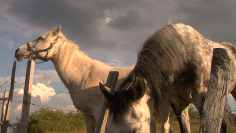horses 07 Stock Video Footage