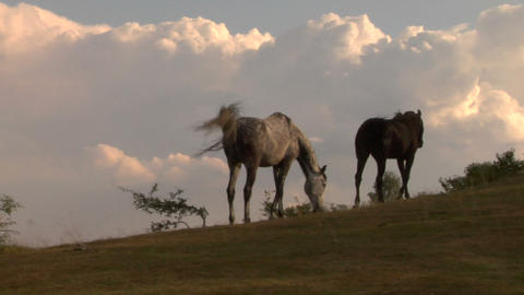 horses 09 Stock Video Footage