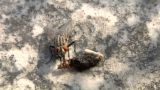 House Fly 01 stock footage
