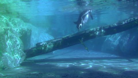 penguin 02 Stock Video Footage
