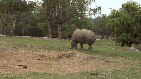 rhinoceros 01 Stock Video Footage
