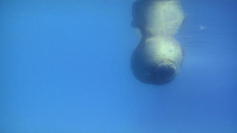 seal 03 Stock Video Footage