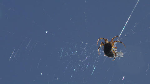 spider 01 Stock Video Footage