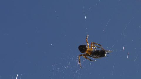 spider 03 Footage